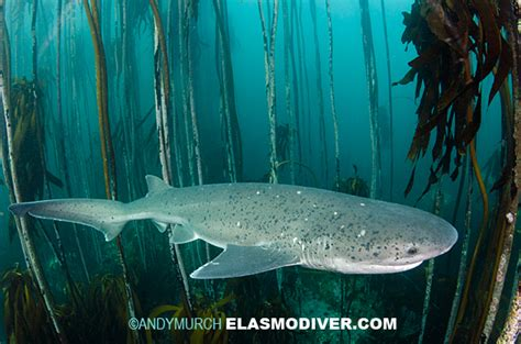 gill filaments great white shark a up look at diving with great white sharks sevengills and catsharks