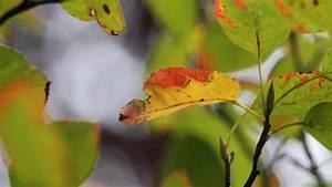 Einen Strich Durch Die Rechnung : wettertrend f r deutschland vom der oktober macht uns einen strich durch die rechnung ~ Themetempest.com Abrechnung