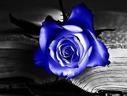 Rose Wallpapers Desktop Backgrounds Purple Rosa Flowers