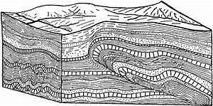 Vocal Folds Diagram