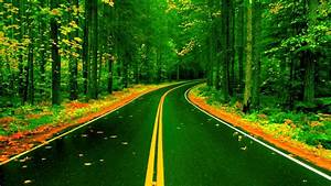 Forest, Road, In, Autumn, Image, -, Id, 249722