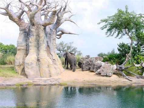 Animal Kingdom Wallpaper - animal kingdom wallpaper free background picture for