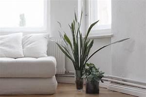 Palmen Für Drinnen : orchideen sukkulenten palmen ein dschungel f r zu hause ~ Bigdaddyawards.com Haus und Dekorationen