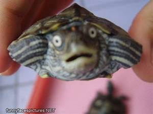 My First Blog: Funny and cute turtles :)