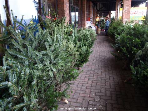 wwwhouston garden center xmas tree sale we review shopping at hollybush garden centre