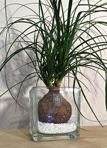 15 must see gravier blanc pins marches de la porte d With ordinary idee allee de maison 11 creer le plus beau jardin avec le gravier pour allee