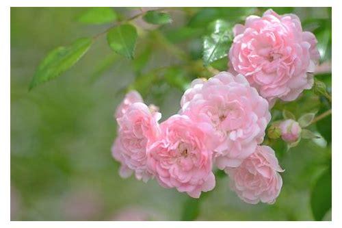 baixar imagem de flores de primavera