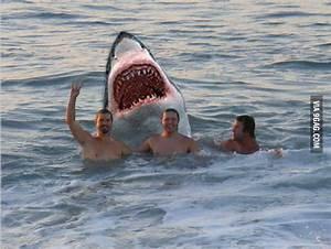 Photobomb Shark - 9GAG