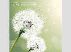 Dandelion free vector download 91 Free vector for