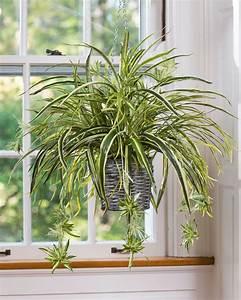 15, Best, Low, Light, Indoor, Plants