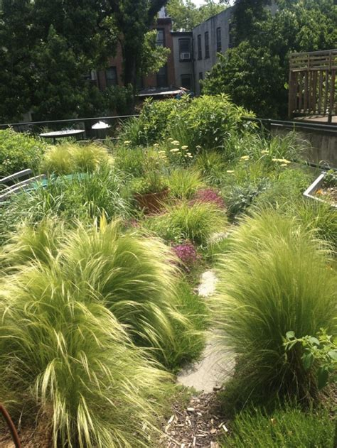 grass plants for landscaping gossamer gardens 11 ideas for landscaping with mexican feather grass gardenista