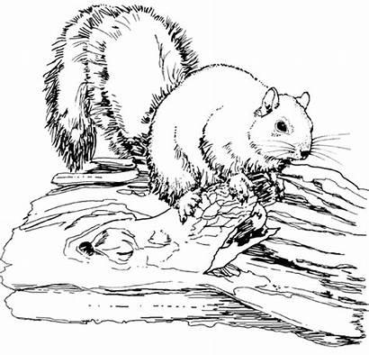 Squirrel Fox Coloring Animal Pages Printable Animals