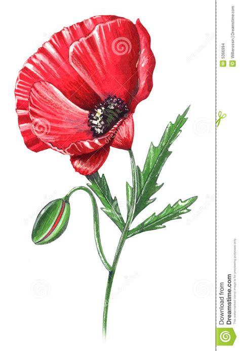 poppy seed designs poppy flower stock illustration illustration of artistic 5366994
