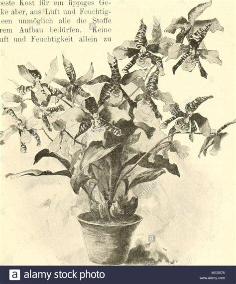 kaffeesatz als dünger für orchideen das reich stock photos das reich stock images alamy