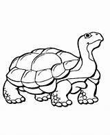 Coloring Animals Animal Pages Hibernating Hibernate Hibernation Colour Turtle Printable Wild Preschool Learning Clipart Tortoise Colouring Cliparts Cartoon Drawing Sketch sketch template
