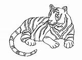 Coloring Tigers Tiger Pages Children Printable Animals sketch template