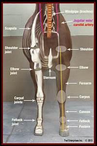 Vitals  U0026 Anatomy