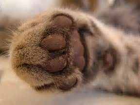 cat s paw file a cat s paw jpg wikimedia commons