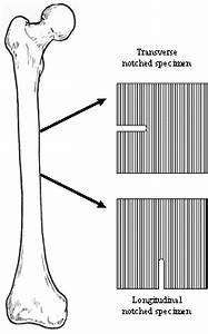 Specimens Used For Crack Propagation Study  This Diagram Also Shows The