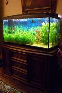 Aquarium Zubehör Günstig : 200l aquarium neu und gebraucht kaufen bei ~ Frokenaadalensverden.com Haus und Dekorationen