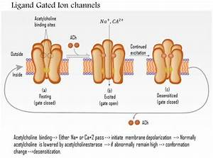 0614 Ligand Gated Ion Channels Medical Images For
