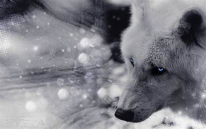 Wolves Wallpapers Wolf Timber