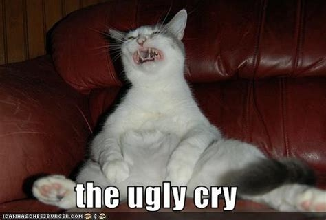 Ugly Cat Meme - ugly cry wordsofthewises