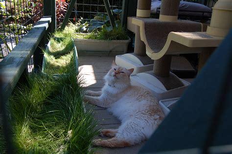 create  cat friendly garden adventure cats