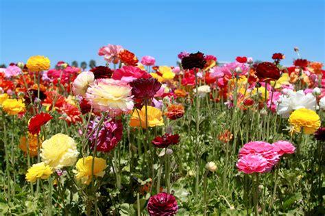 welche blumen blühen im juni bloeiende bloemen stock afbeelding afbeelding bestaande uit weide 19575121