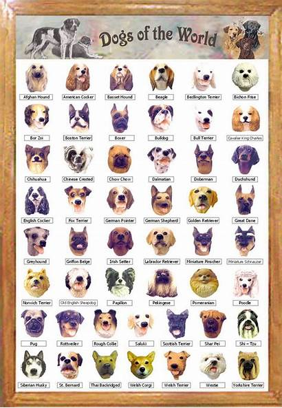 Breeds Dog Dogs Different Every There Many