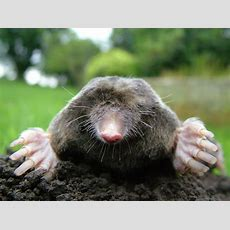 What Is Mole Day?  Date And How To Celebrate