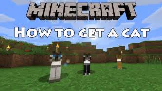 how to get a cat to take a pill minecraft how to get a cat