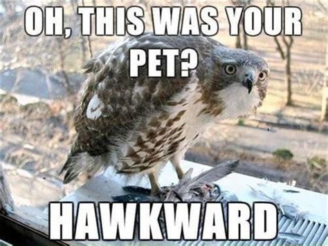 Funny Bird Memes - 30 funny animal captions part 15 30 pics amazing creatures