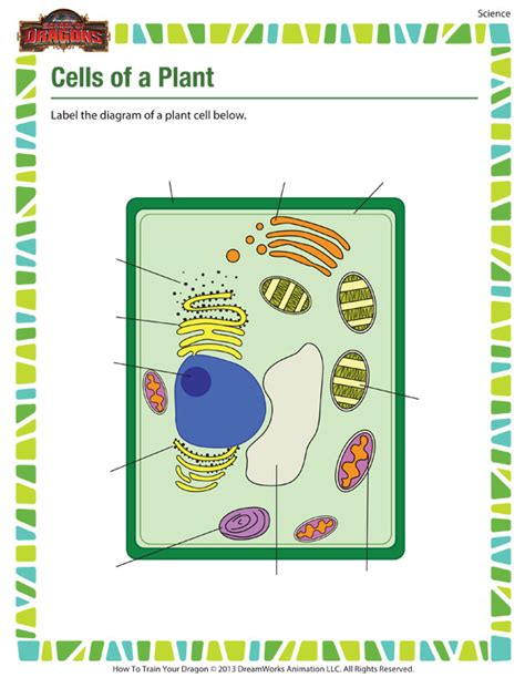 cells of a plant 5th grade science worksheet