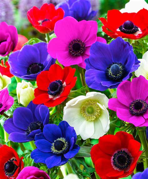 di fiori acquista confezione bulbi di fiori estivi bakker
