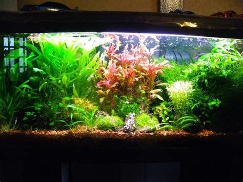 aquarium 120 litres pas cher