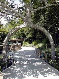 Unusual trees around the world | Ladies Mails