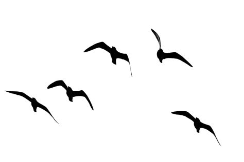 Flock Of Birds Clipart Seagul Pencil And In Color Flock