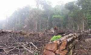 Amazon deforestation leaps 16 percent in 2015 | Inhabitat ...