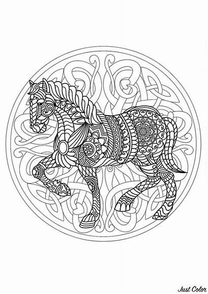 Mandala Coloring Horse Mandalas Patterns Interlaced Head