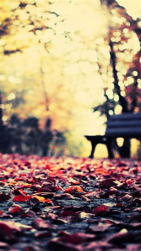 artsy wallpapers iphone autumn leaves park bench iphone 5 wallpaper iphone