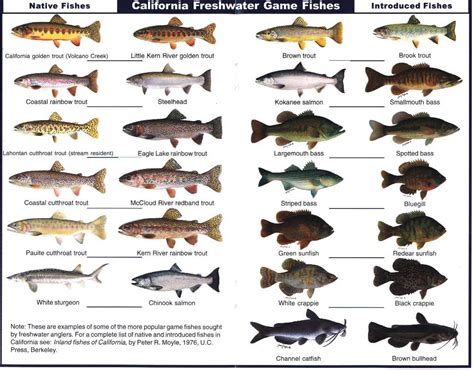 california freshwater game fish notice  trout  top