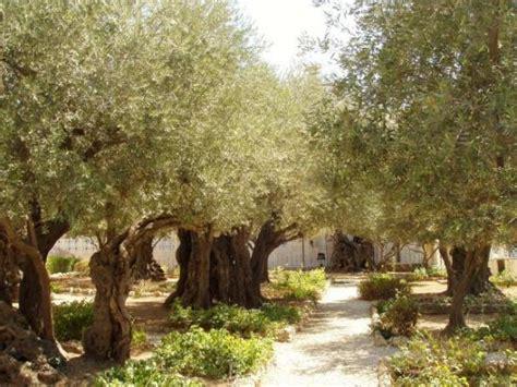 garden of gethsemane being frank finding your gethsemane