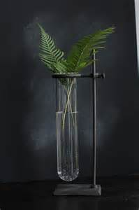 Ferns Test-Tube