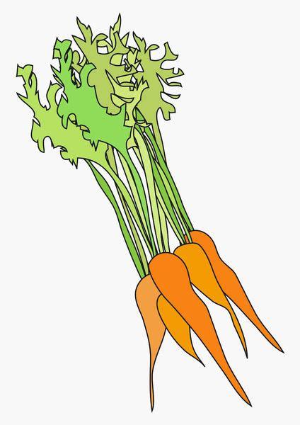 digital illustration  fresh bunch  carrots