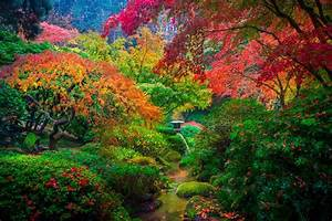 Amazing Picture of A Japanese Garden in Portland, USA