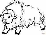 Yak Colorear Dibujos Coloring Buffalo sketch template