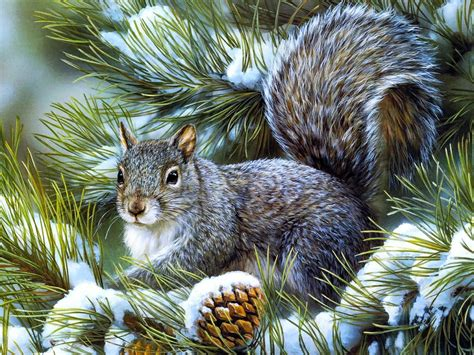animal christmas sweet winter squirrel animals squirrels