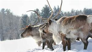 Life In The Taiga : what are the adaptations for animals to survive in the taiga sciencing ~ Frokenaadalensverden.com Haus und Dekorationen
