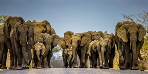 pictures   month march  africa geographic